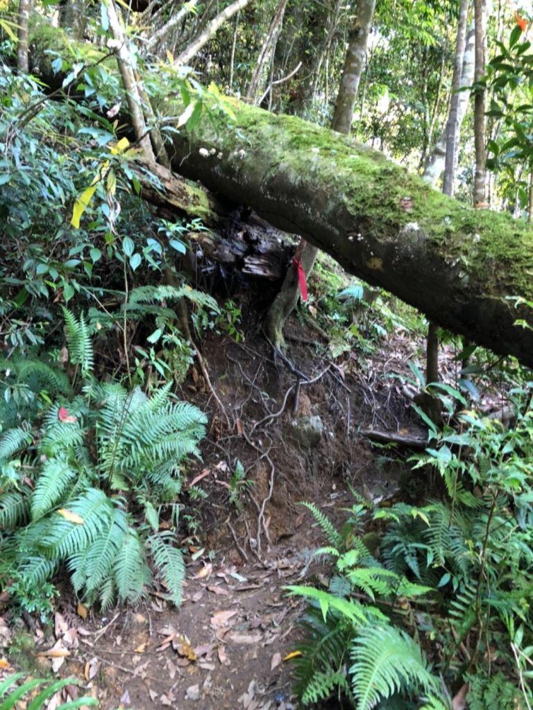 水漾森林一日往返_324552