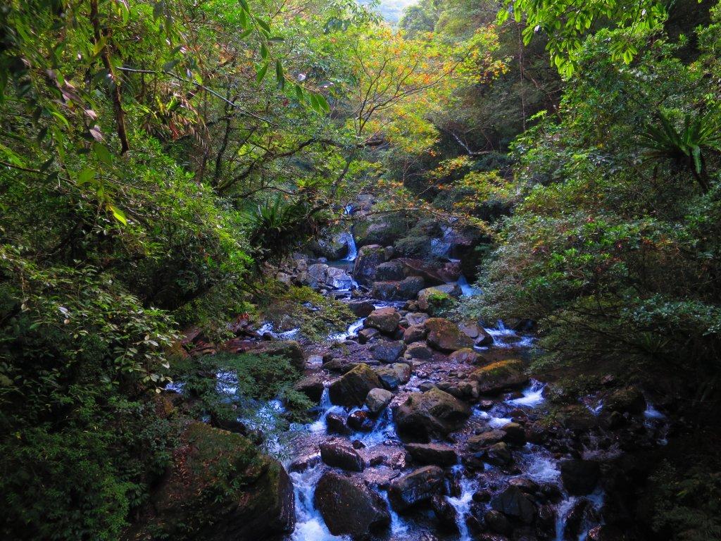 享受楓紅森林浴:東滿步道_747475