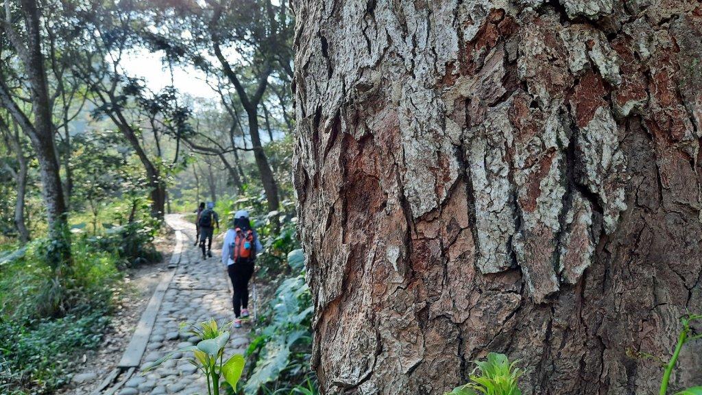 《彰化》社頭18彎古道上橫山+山湖步道O型20210228_1287522