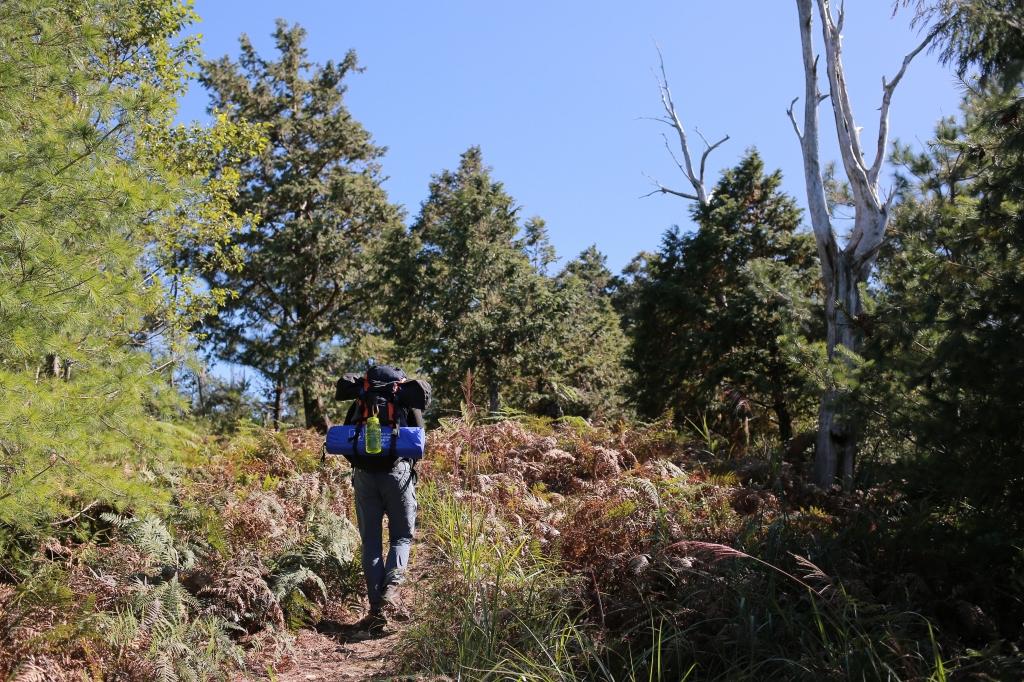 鹿屈山:水漾森林_73552
