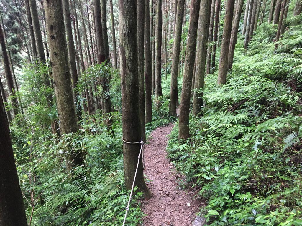 2018/06/18高台山連走島田三山_353823