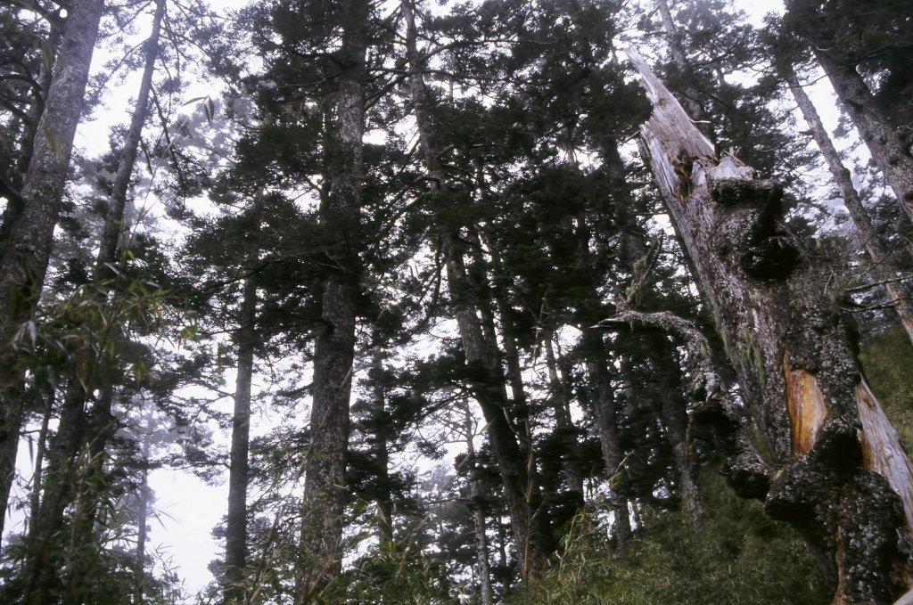 第一次的高山旅行 玉山八通關  2005_623378