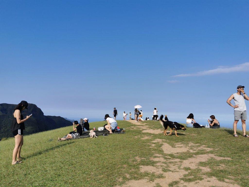 桃源谷步道(大溪、草嶺線)-滿谷牛與白鷺_1033976