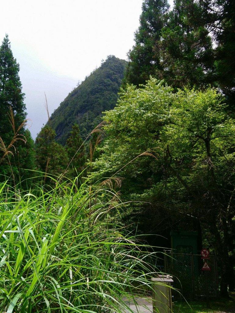 觀霧(榛山,檜山,野馬瞰山,觀霧瀑布)_636053