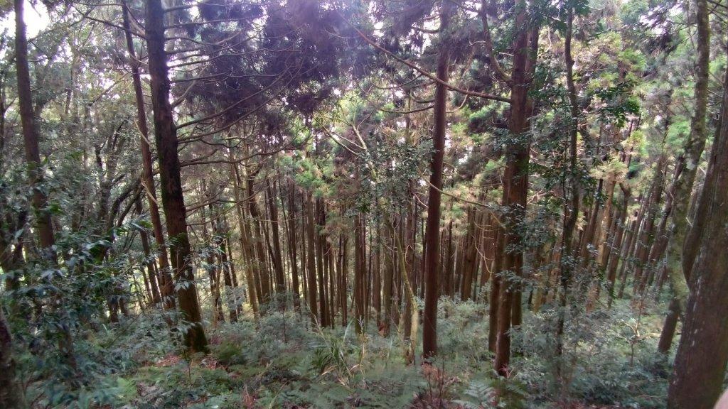 藤枝國家森林遊樂區_558809