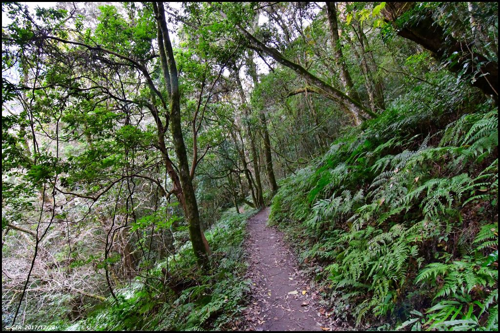 千年的對話~鎮西堡巨木森林 B區_234323
