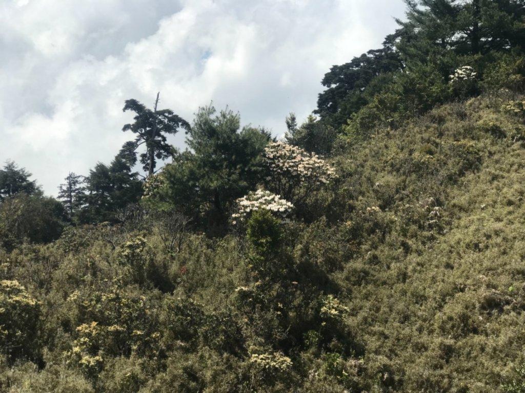 石山 草原上的高山杜鵑花紛紛爆發_560360