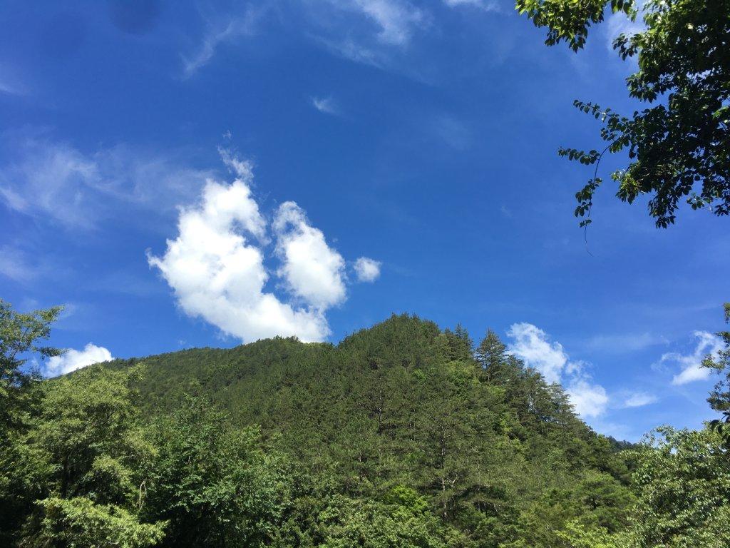 武陵農場~~桃山步道_1050900