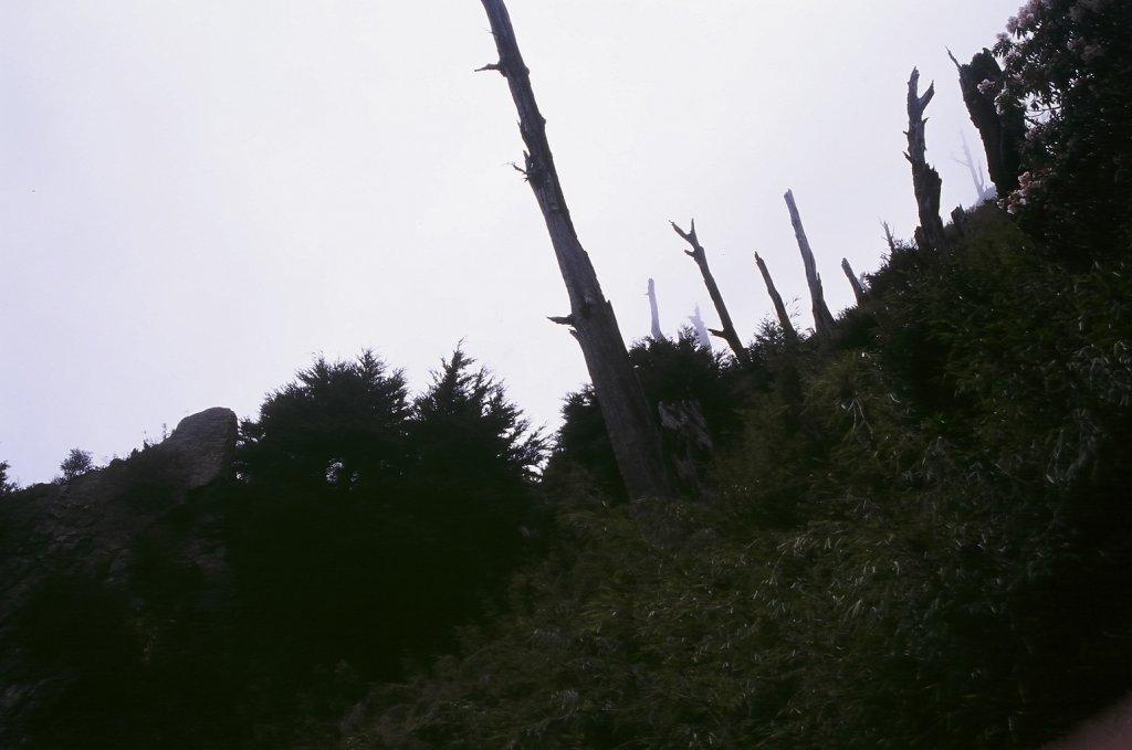 第一次的高山旅行 玉山八通關  2005_623379