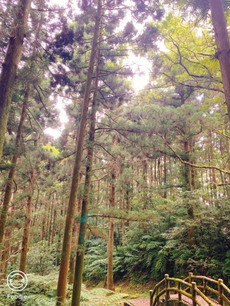 東眼山森林步道_1039686