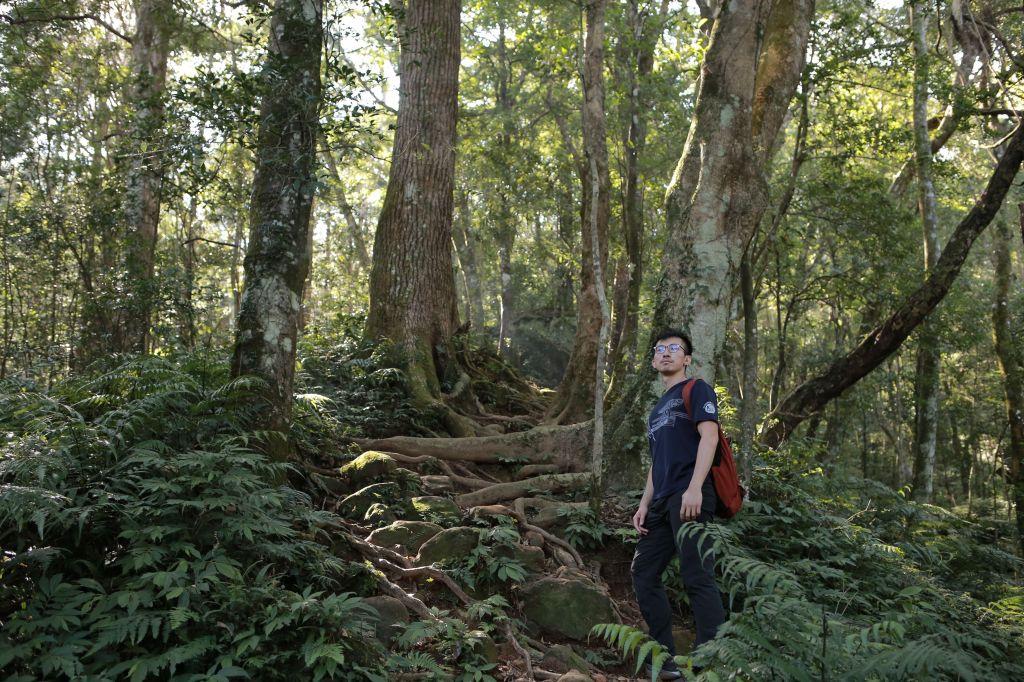 北得拉曼:巨木步道_173392