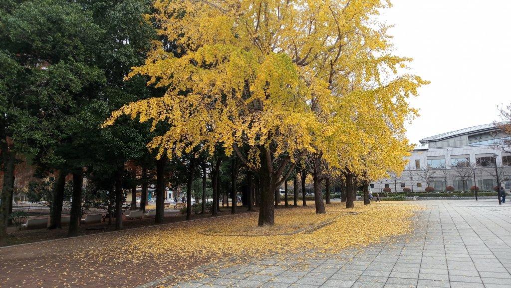 東京都練馬区光が丘公園_760610