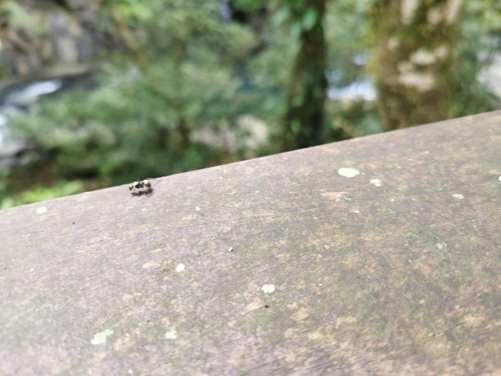 滿月圓國家森林步道群-觀瀑吹涼風佐森林浴_1062290