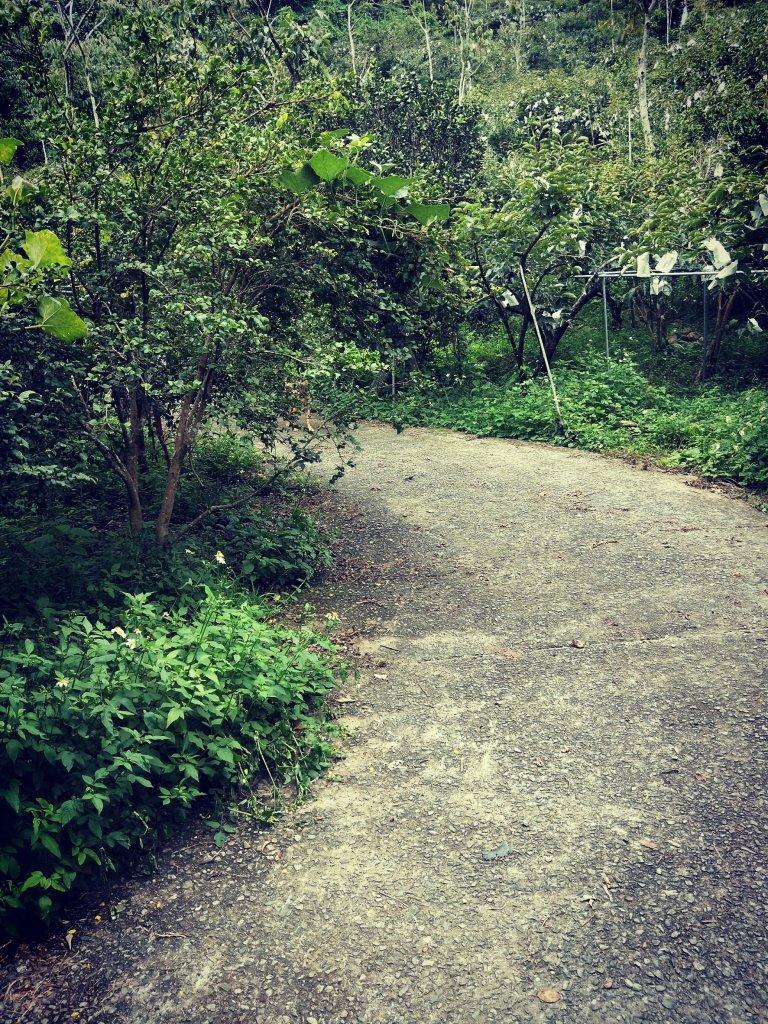 步道巡訪員 l 白毛山步道9月巡訪日誌_1098945