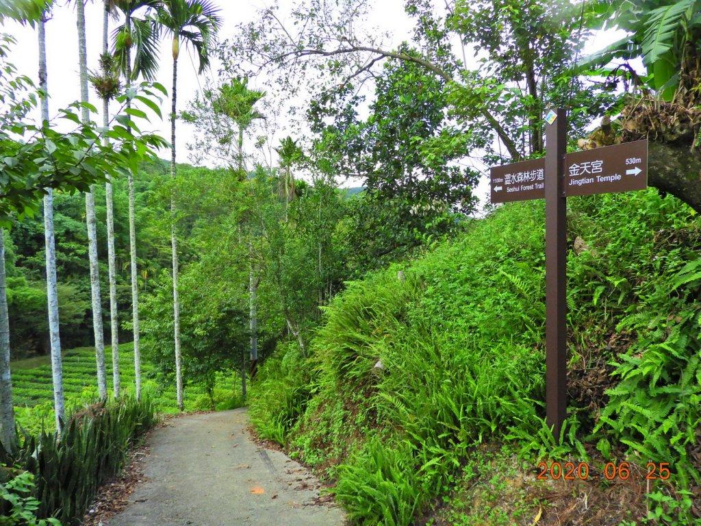 南投 魚池 澀水森林步道_1012401