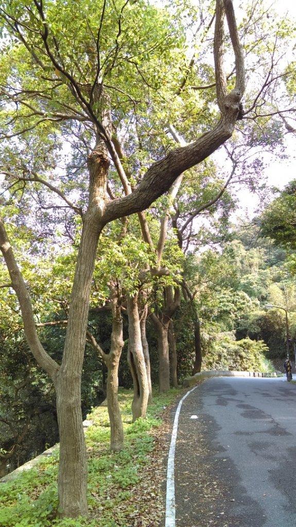溪水潺涓的半嶺水圳步道、硫氣氤氳的龍鳳谷_890841