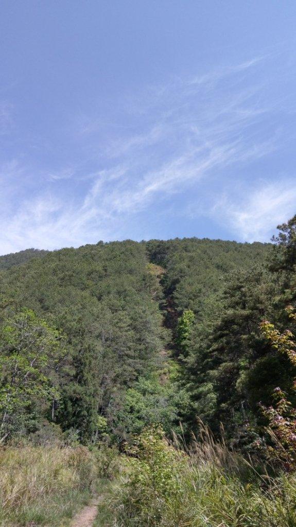 百岳天堂路 天梯散步道_662133