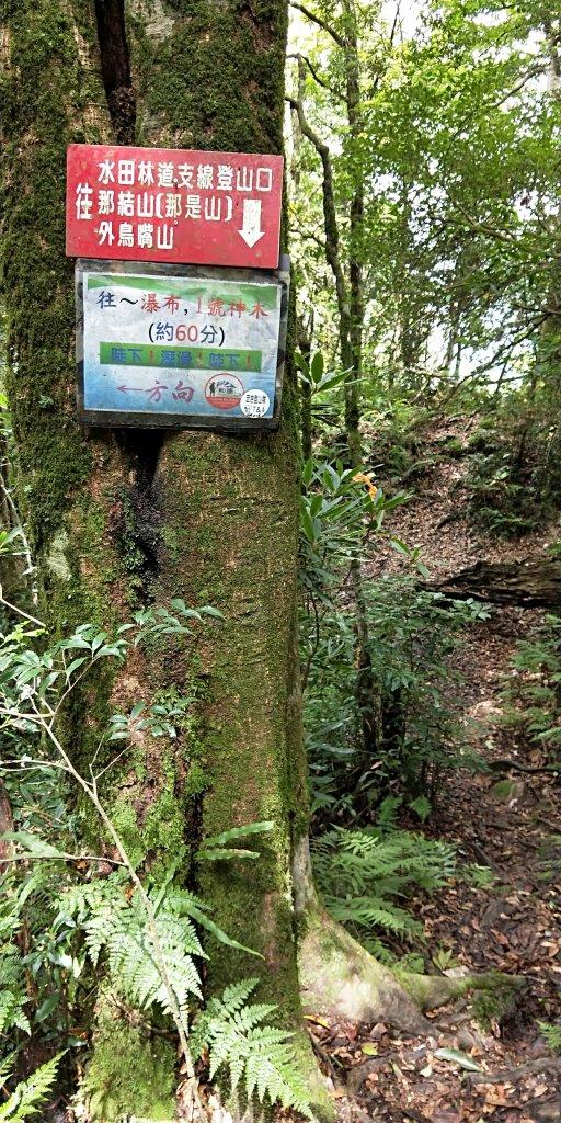 內鳥嘴山,北得拉曼神木群步道,瀑布初體驗_1062703