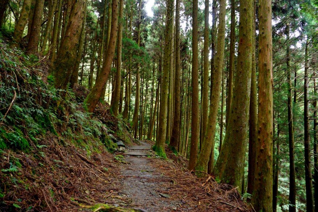 檜山巨木森林步道_481542