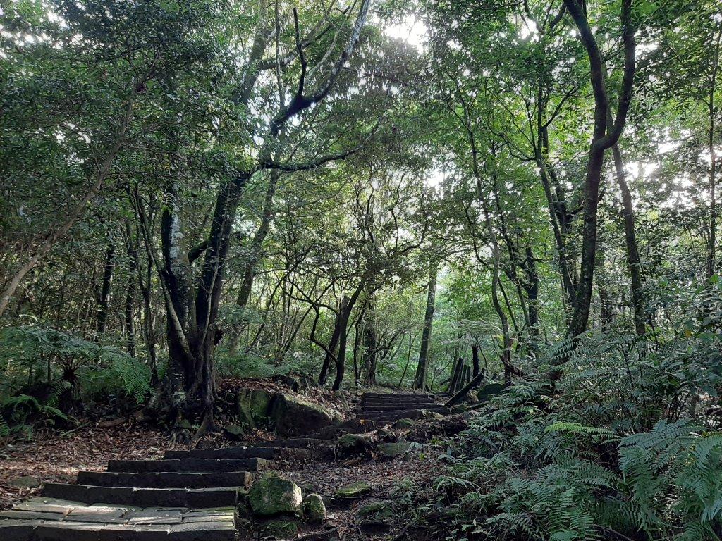初秋走讀森林的風情與美感_1121420