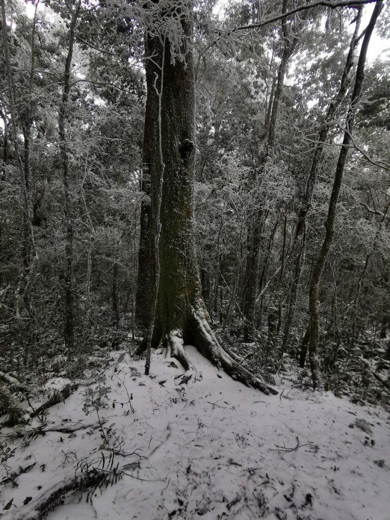 寒流到北得拉曼&內鳥嘴山追雪 - 2021/1/9_1322700