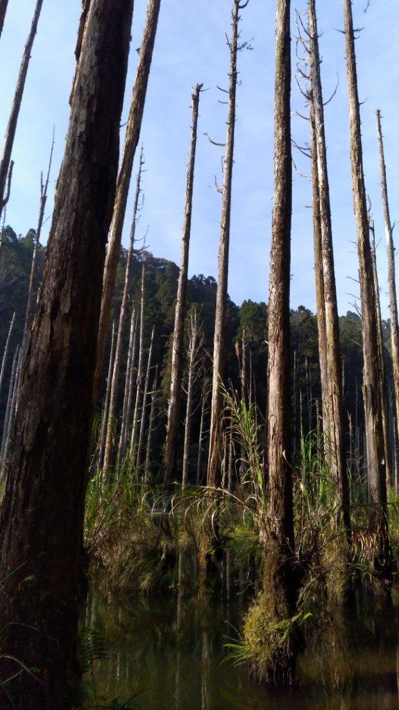 水漾森林_561472