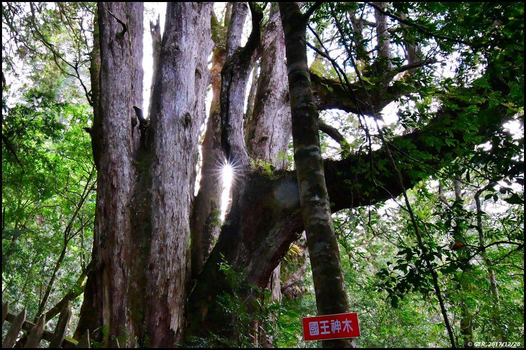 千年的對話~鎮西堡巨木森林 B區_234510