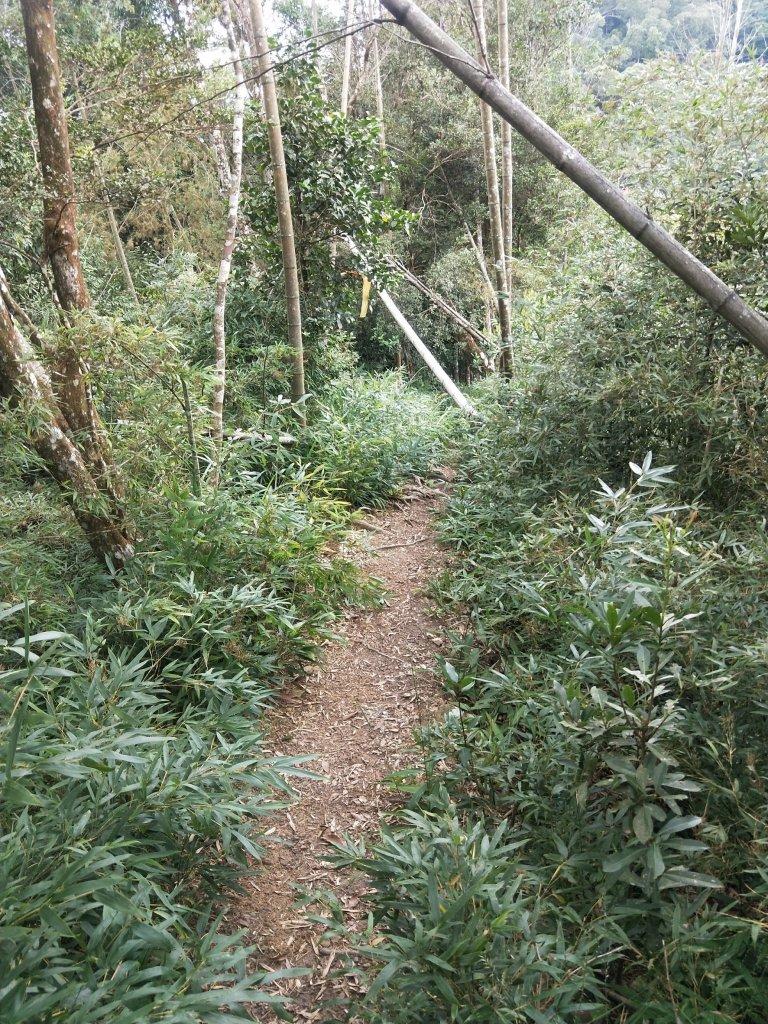步道巡訪員 l 白毛山步道9月巡訪日誌_1098957