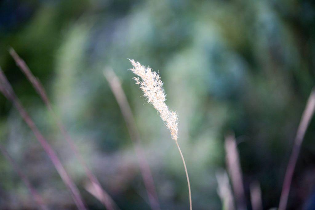 2017-Sep.15,羊頭山。_172899