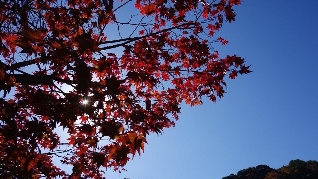 日本京都嵐山_651847