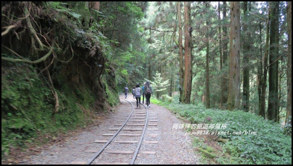 嘉義。特富野古道。鐵道森林最美的步道_422549