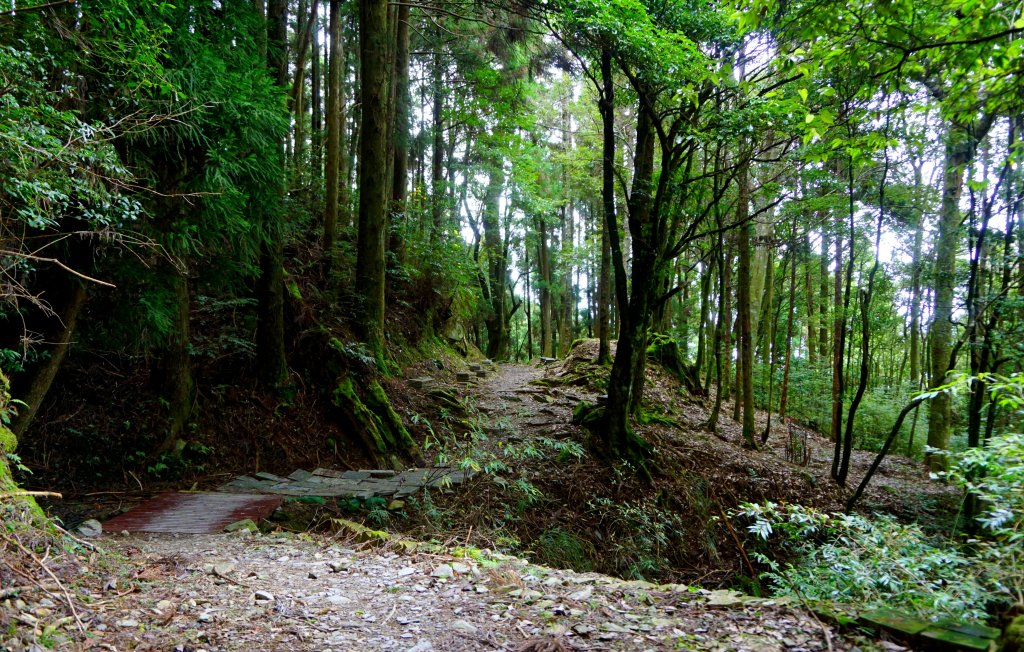 檜山巨木森林步道_481536