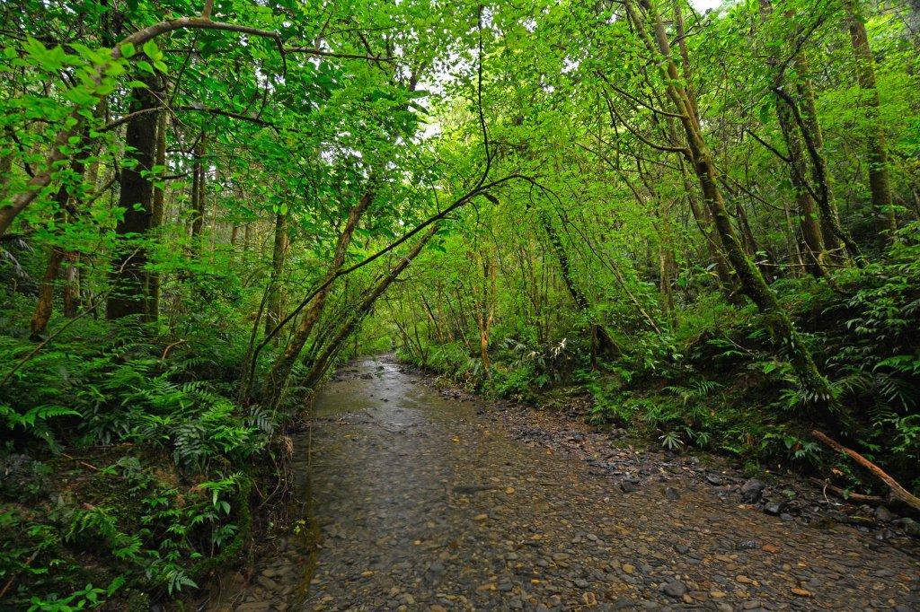 坪溪古道-走進綠色隧道的水地毯_1050408