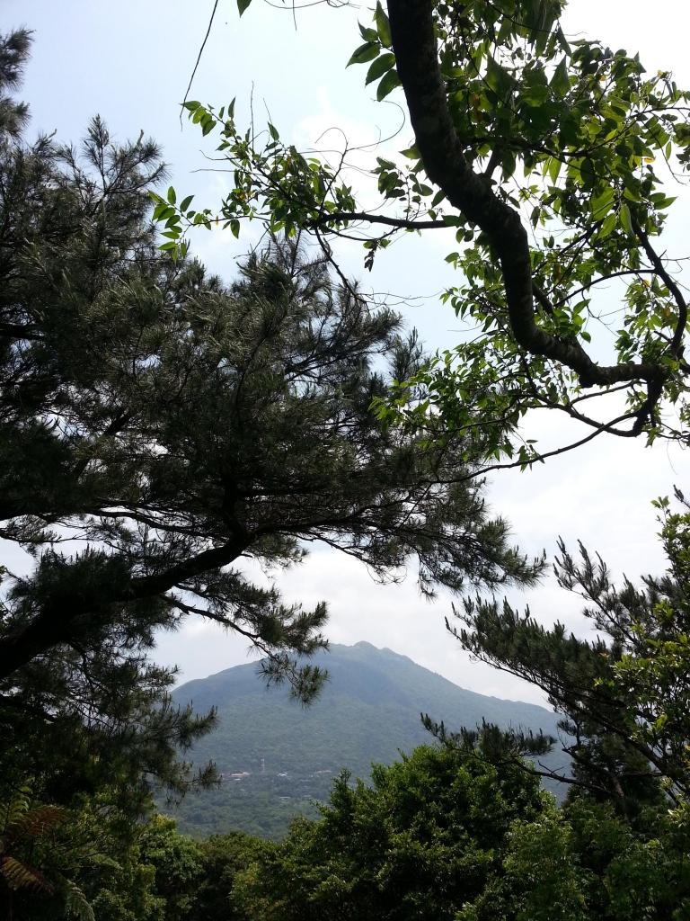 春夏之際-竹子湖&中正山_17963