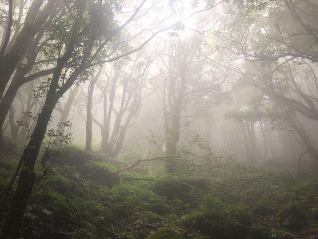 觀霧檜山巨木森林步道_171711
