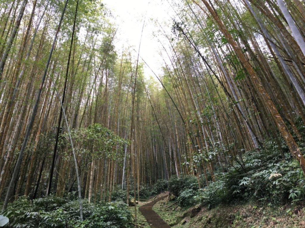 奮起湖步道神社遺址_558884