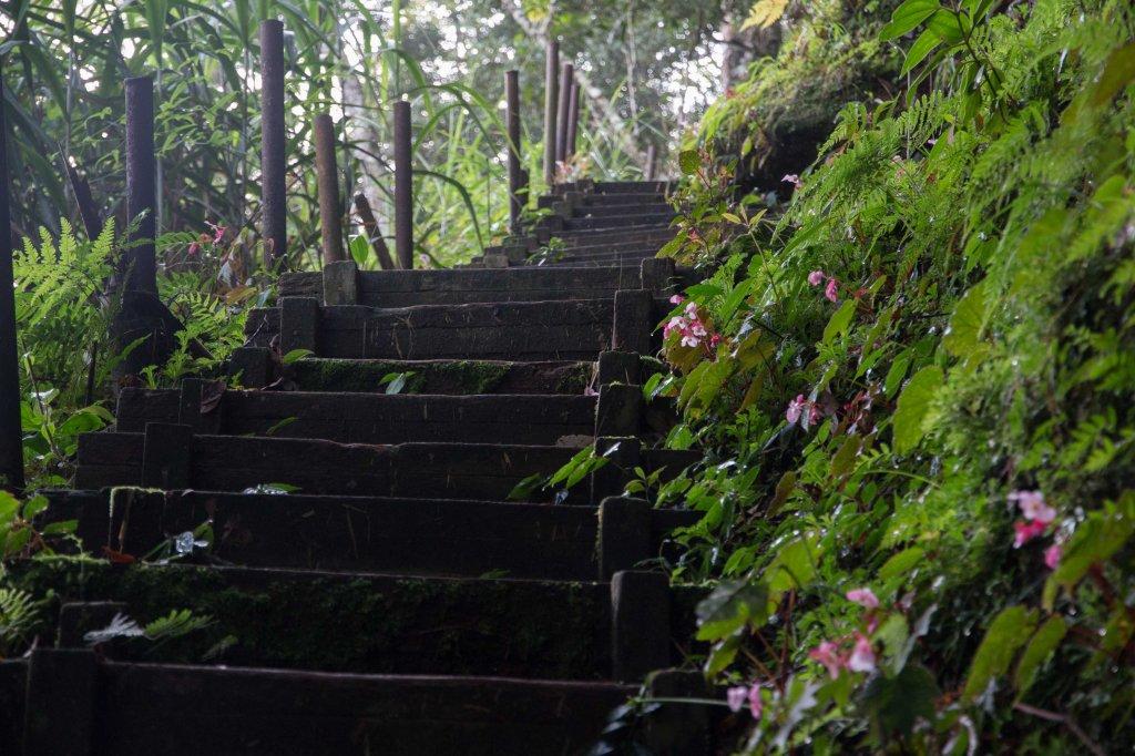 步道巡訪員 l 四大天王山七月巡訪日誌_1048270