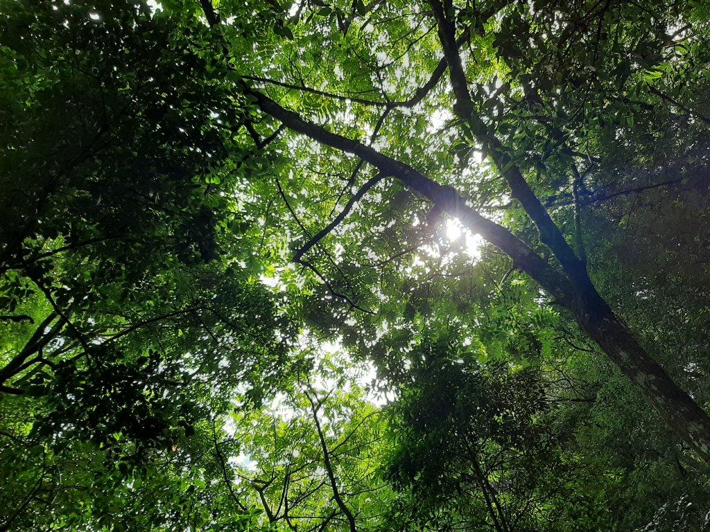 梨山希利克步道 |聆聽大自然的合奏曲_1099384