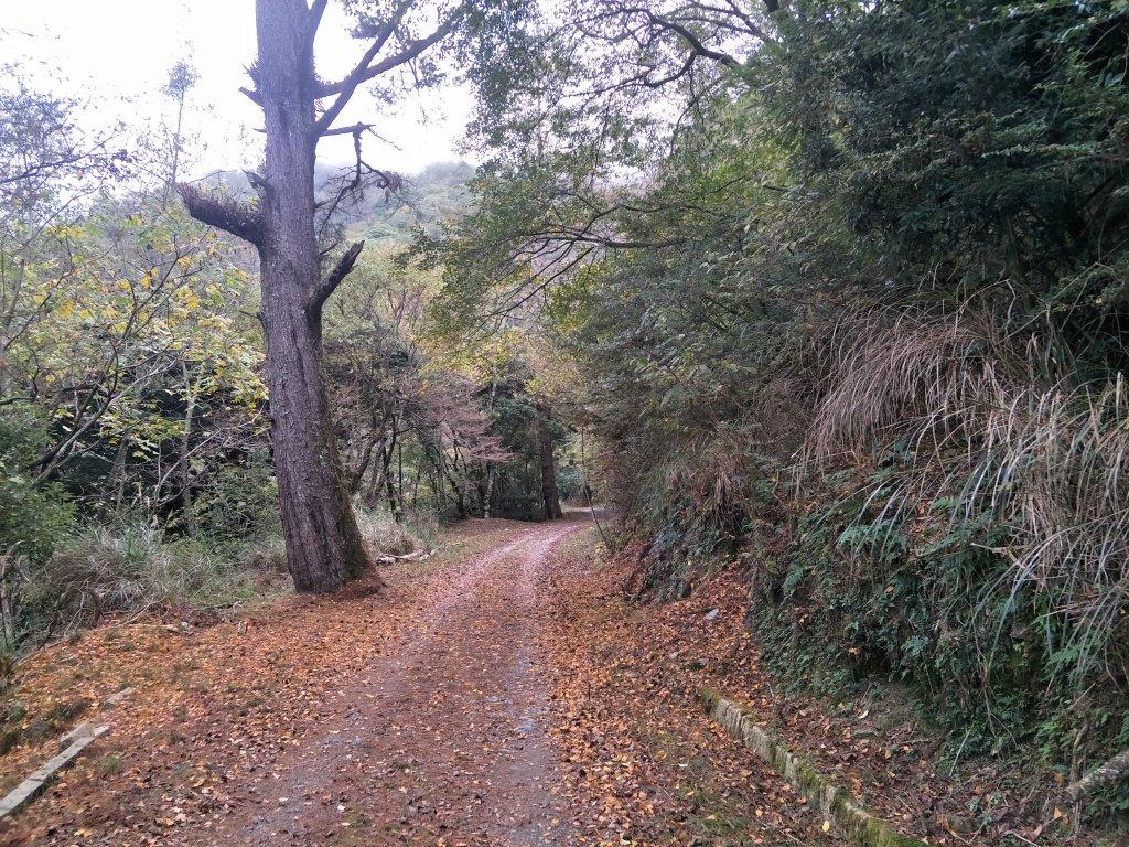 20181214-16大霸群峰登山步道_484492