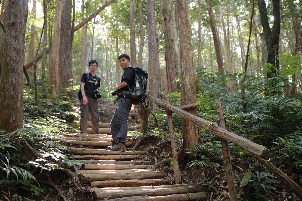 北得拉曼:巨木步道_173399