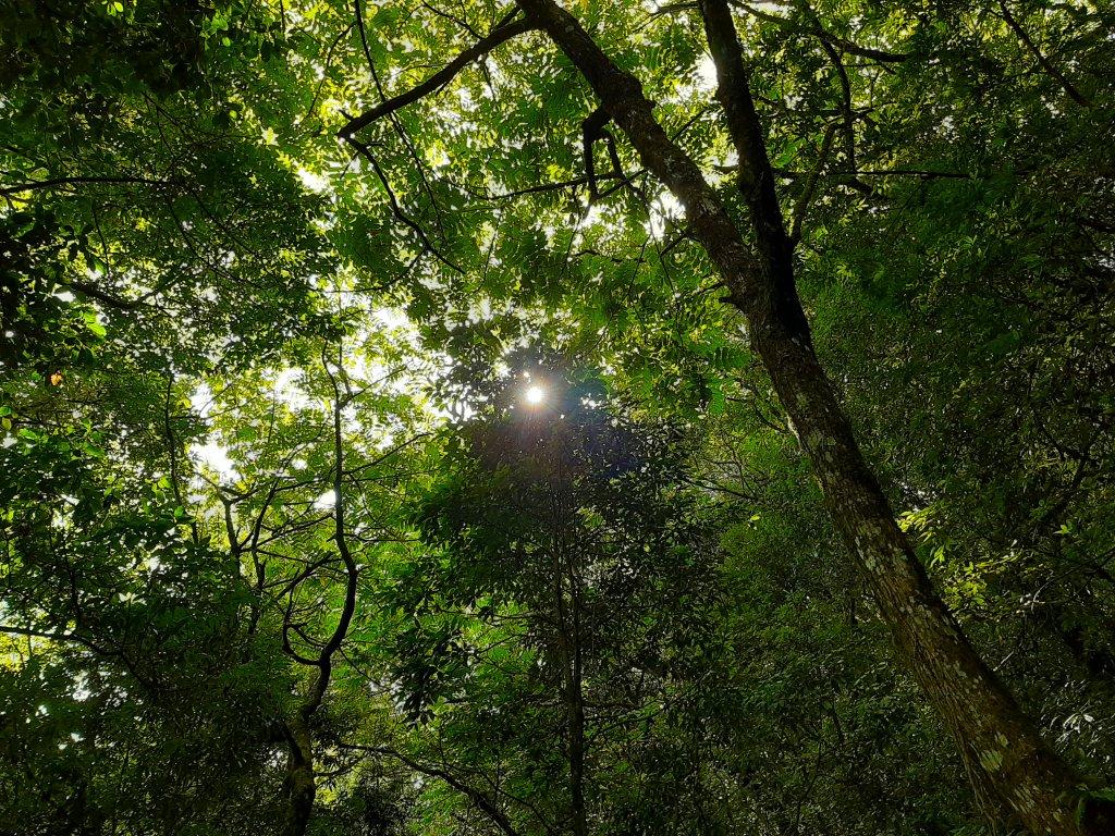 梨山希利克步道 |聆聽大自然的合奏曲_1099349