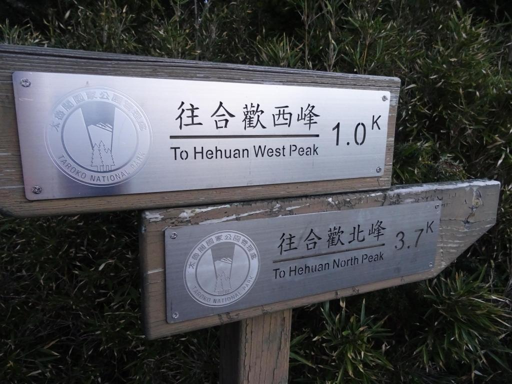 【春夏之際】戀戀玉山杜鵑之合歡北西峰_18832