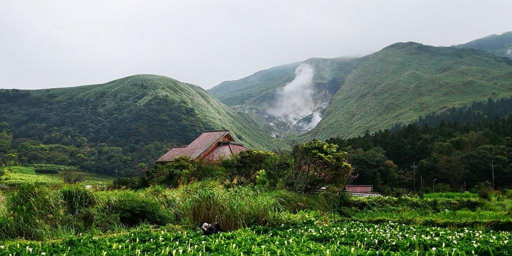 頂湖海芋風情_540153