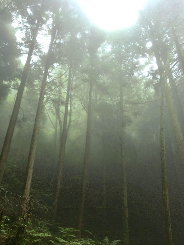 觀霧檜山巨木森林步道_171776