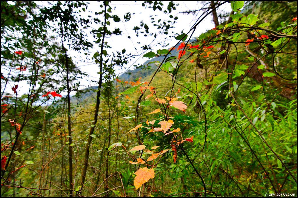 千年的對話~鎮西堡巨木森林 B區_234460