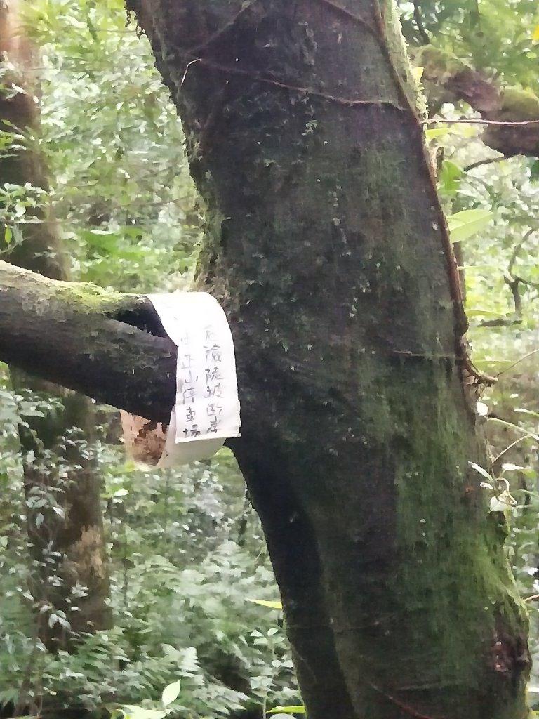 202011 大屯山賞芒趣,西南峰初體驗_1170644
