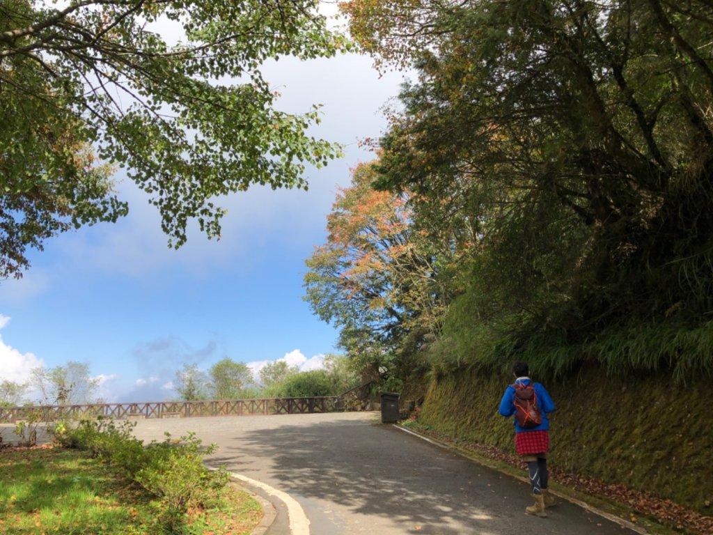 阿里山水山巨木、祝山觀日步道、對高岳步 _726989