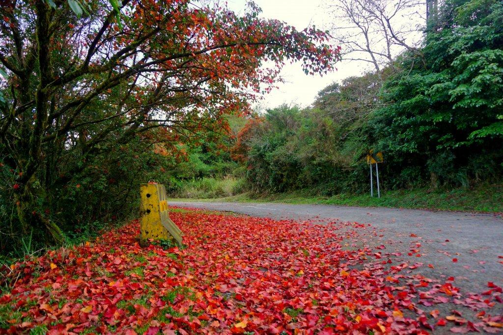 檜山巨木森林步道_481613