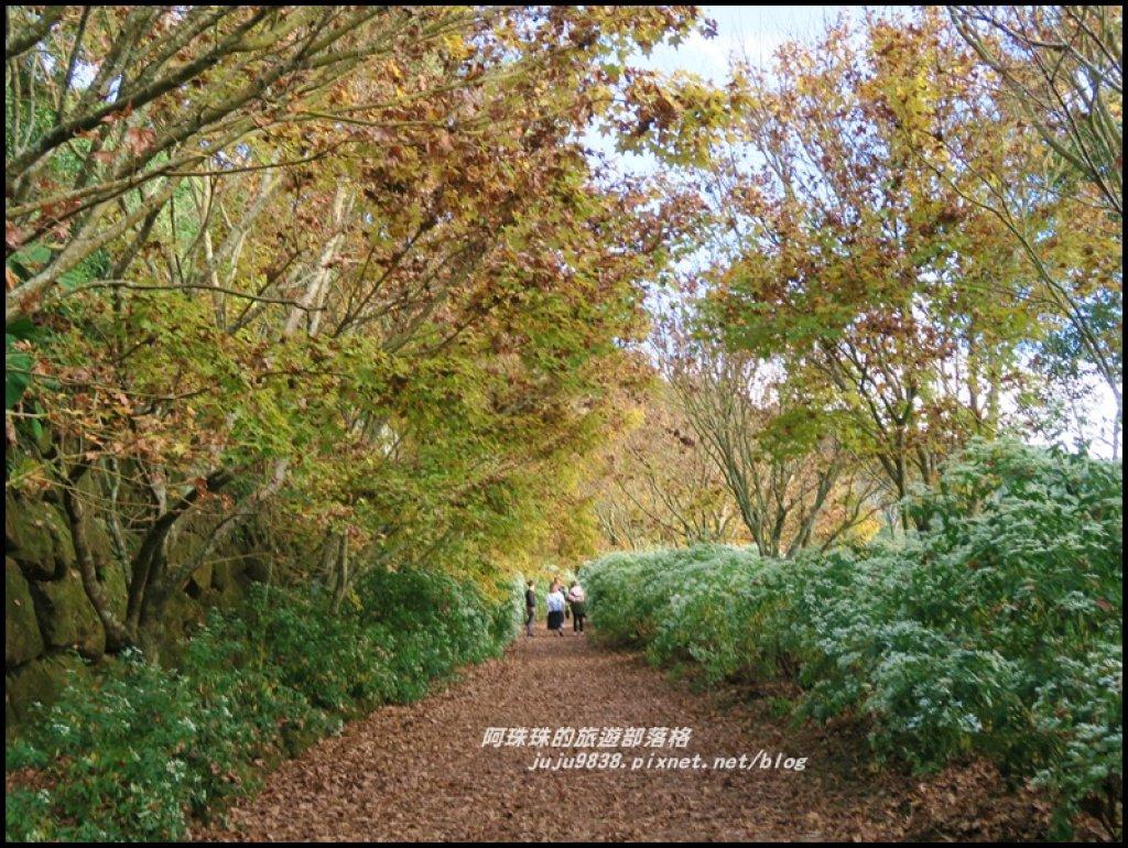 沐心泉冬季限定白雪木與黃金楓的浪漫相遇_481856