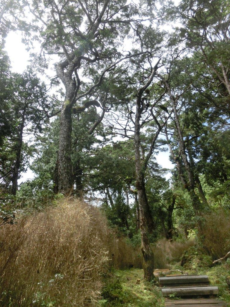 鐵杉林自然步道_672889